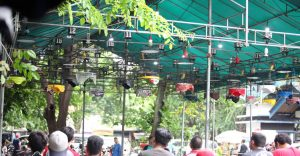 Kelas Love Bird road to Krishna BC 2020
